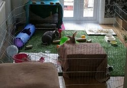 Beaming Bunnies Find Beautiful Home!
