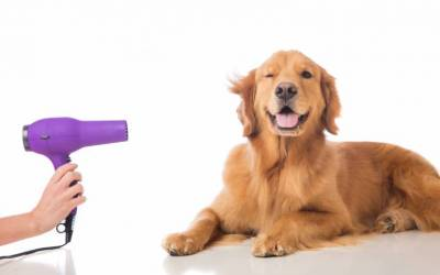 Your all encompassing guide to dog grooming!