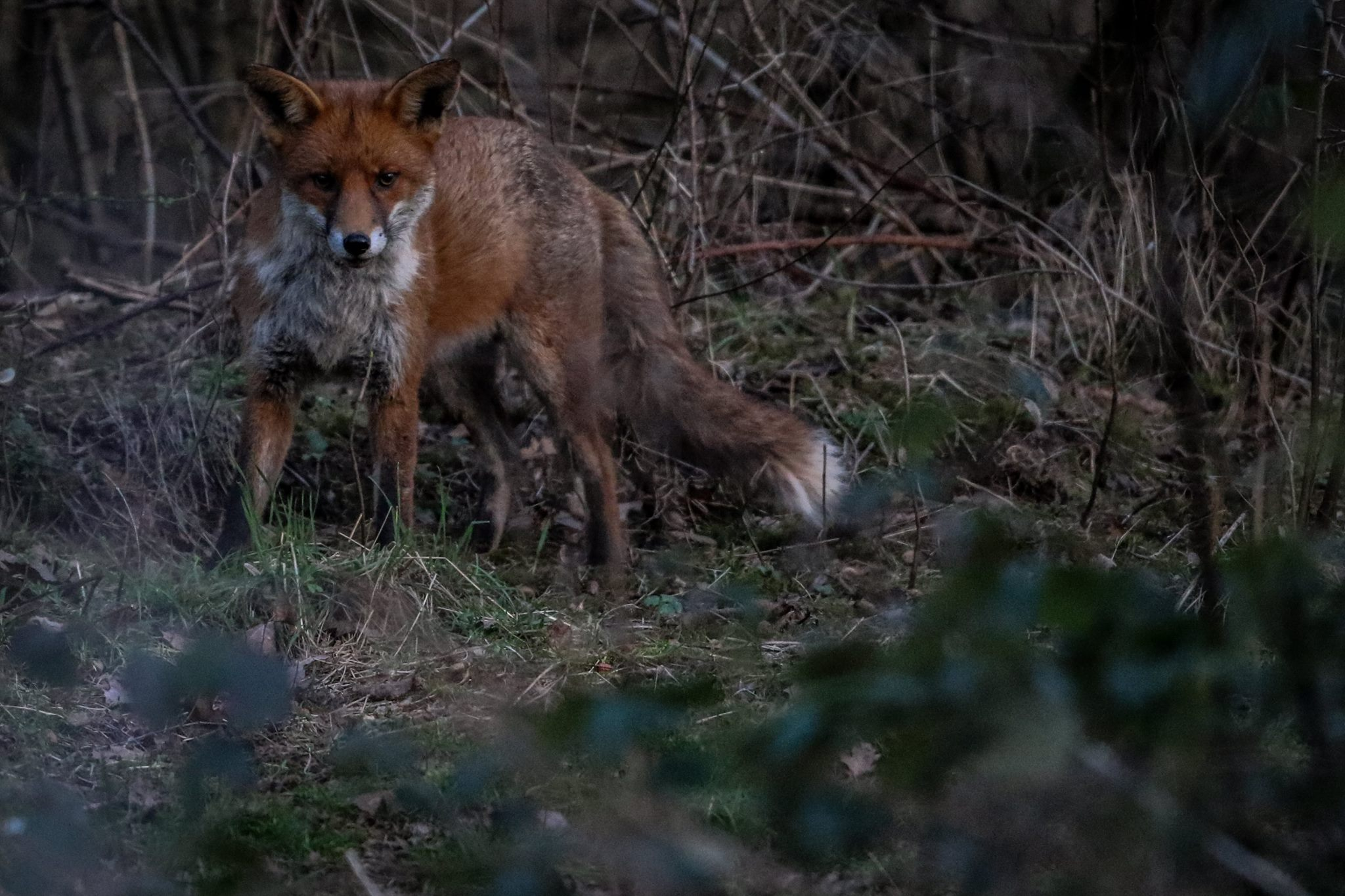 ... are confident enough to go off on their own and find their own food. Some will disperse and find their own territory, and some may stay in the area.
